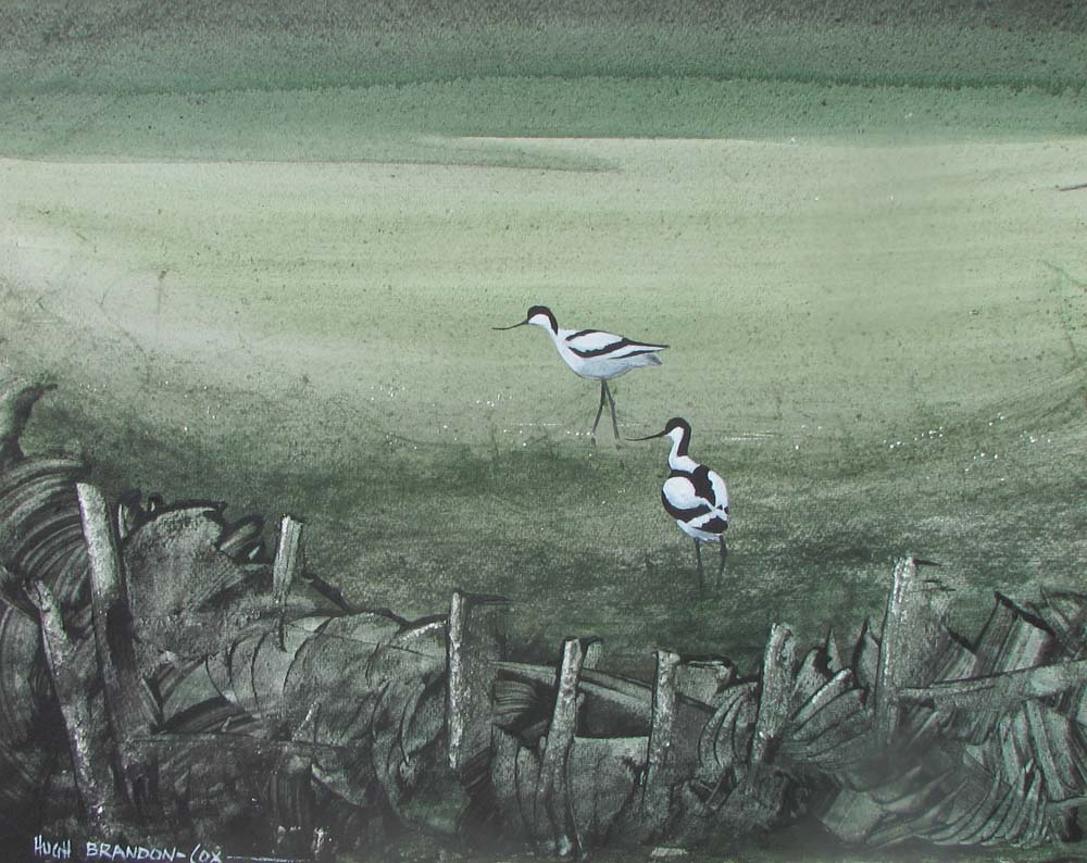 """Blakeney Marshes Avocets 1977"""