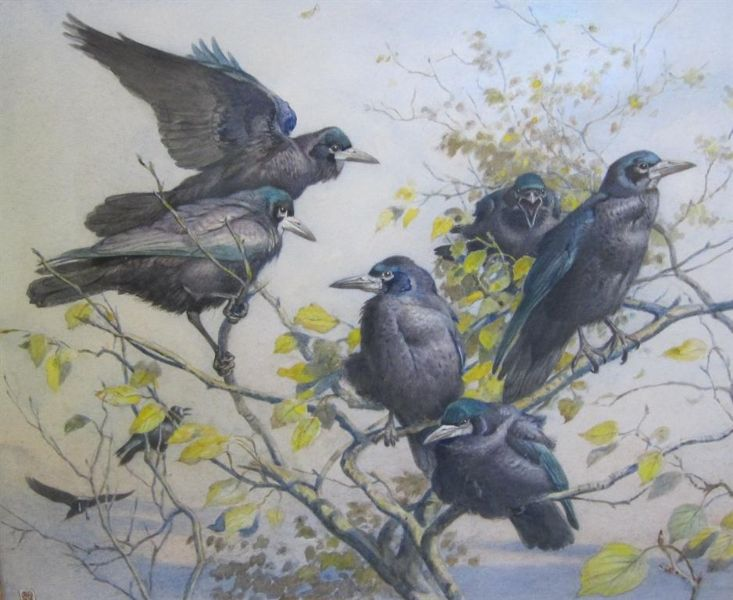 A Parliament of Rooks by Winifred Marie Louise Austen, 1876 - 1964