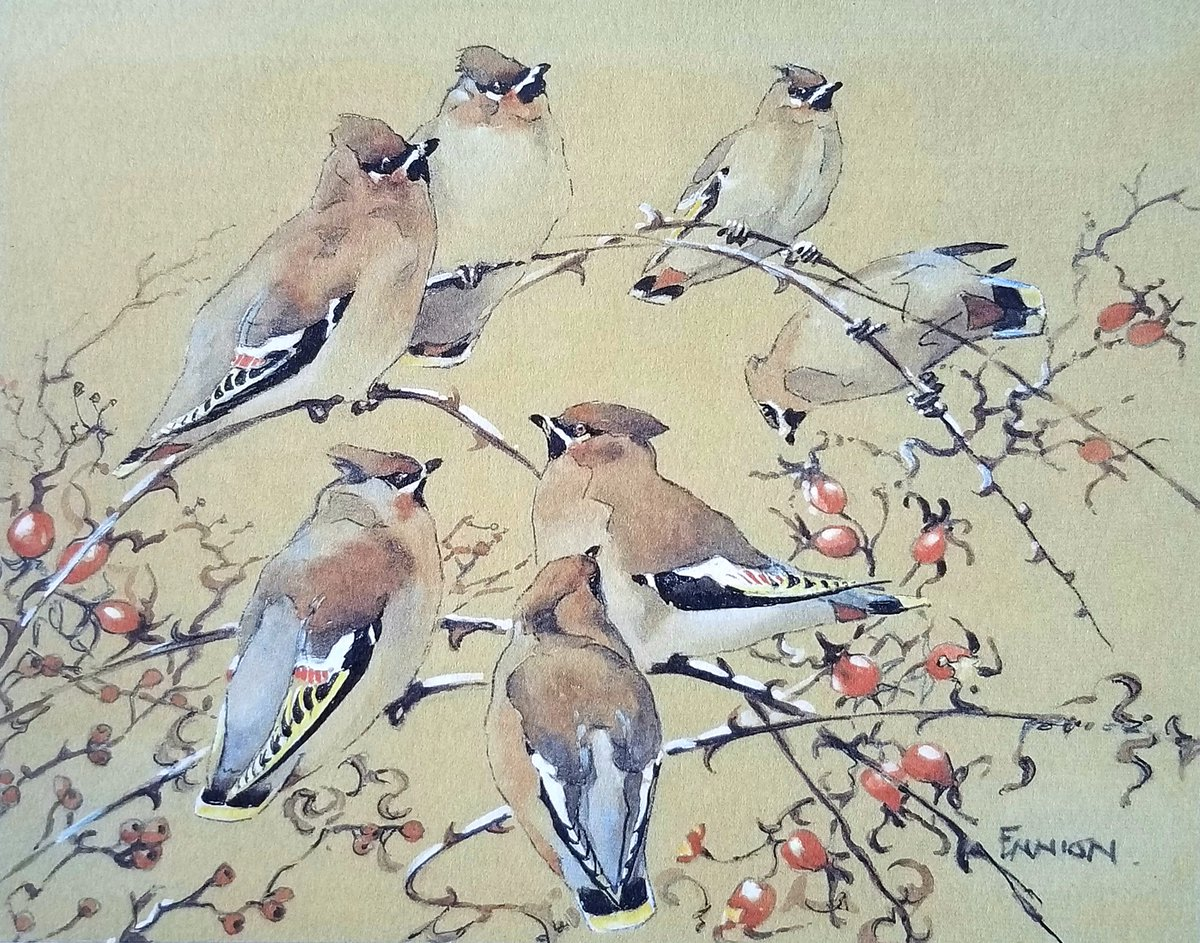 Waxwing by Eric Ennion