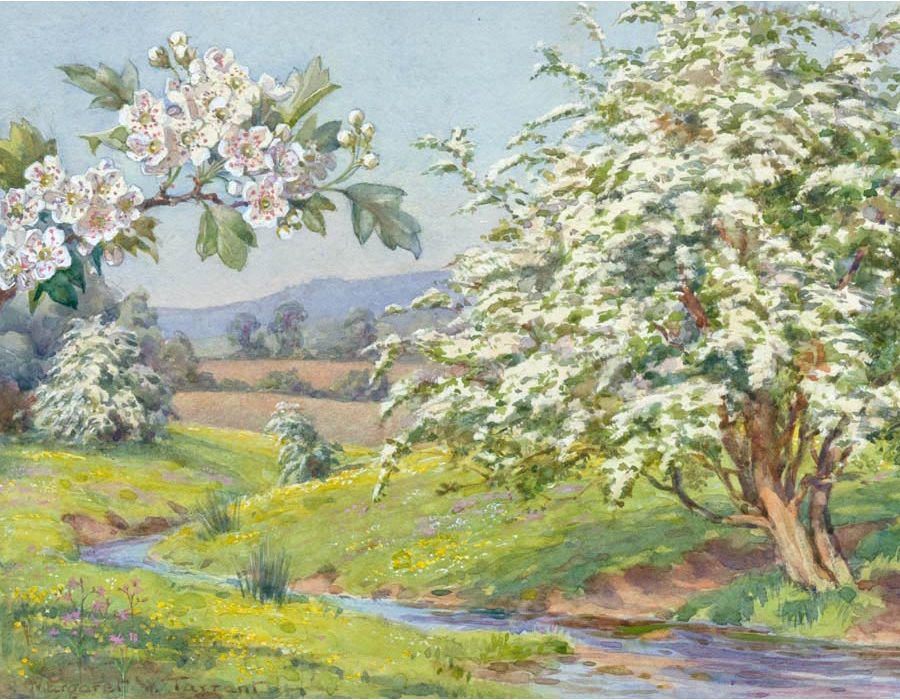 The Hawthorn (or May Tree) by Margaret W. Tarrant (1888-1959)