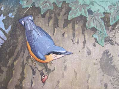 Nuthatch - A Colour Woodblock by Allen W Seaby